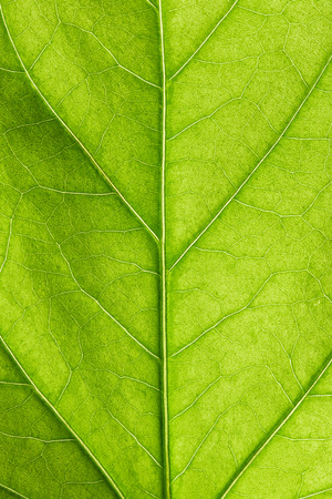 Green leaf close up 版權商用圖片 - 41738816