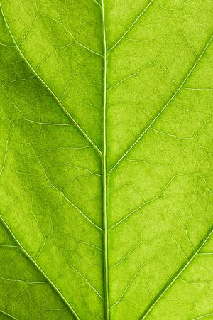 Groene blad close up Stockfoto