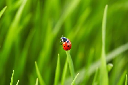 Schöne Marienkäfer auf grünem Gras. Natur Hintergrund Standard-Bild - 42259705