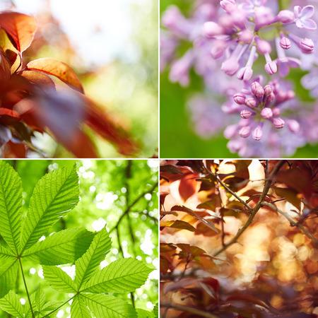 bokeh background: Beautiful bright nature collage Stock Photo
