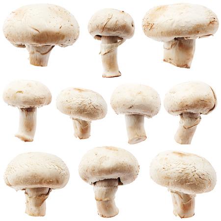 hongo: Conjunto de la seta del champi��n aisladas sobre fondo blanco Foto de archivo