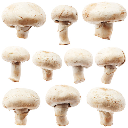 edible mushroom: Set of champignon mushroom isolated on white background