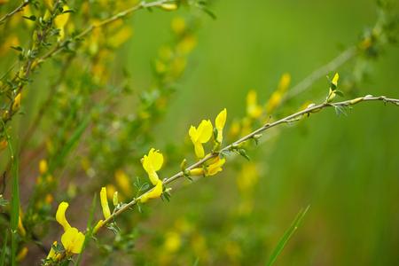 field of flowers: Beautiful yellow field flowers. Nature background