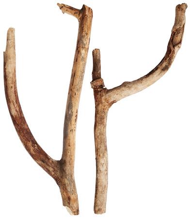 Tree branches Standard-Bild