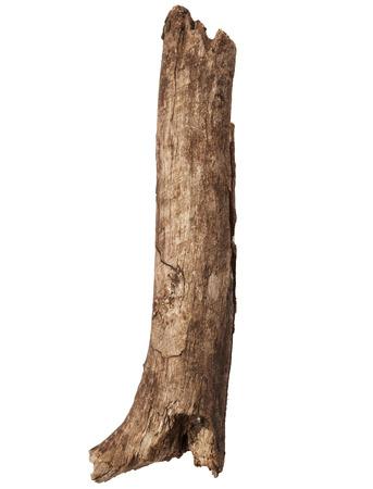 Een deel van boomstam op een witte achtergrond Stockfoto