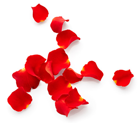 Petals of red rose isolated on white background