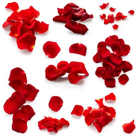 patrones de flores: Conjunto de p�talos de rosas rojas sobre fondo blanco