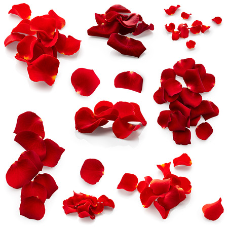 flower close up: Set of red rose petals isolated on white background