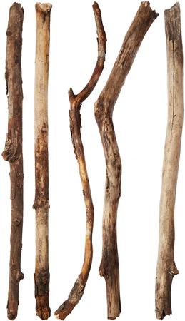 rama: Ramas de árboles aislados sobre fondo blanco