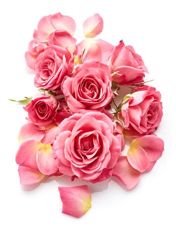 rosas rosadas: Rosas de color rosa aisladas sobre fondo blanco