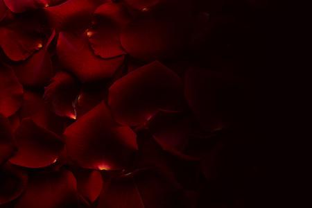 dark red: Petals of red rose. Dark background