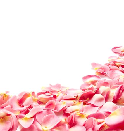 白い背景に分離されたピンクのバラの花びら 写真素材