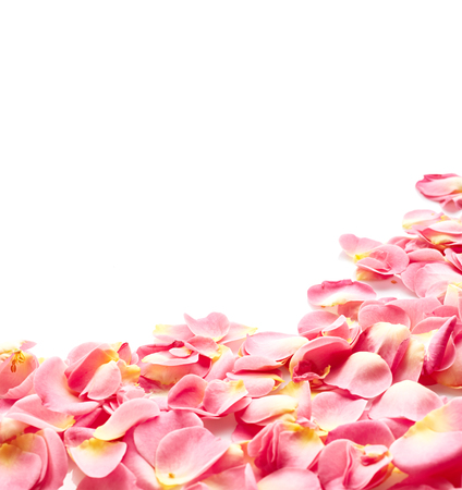scattered on white background: Petals of pink rose isolated on white background