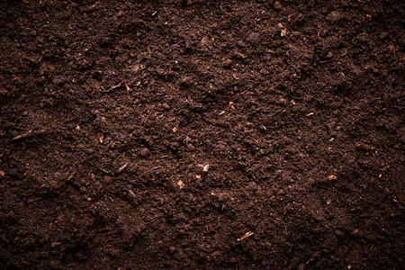 grunge background texture: Soil texture