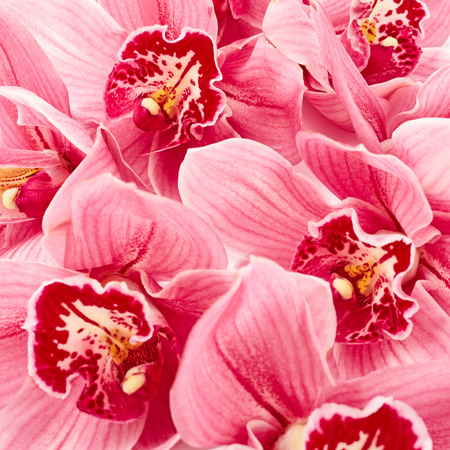 flowers close up: Orchid flowers close up Stock Photo