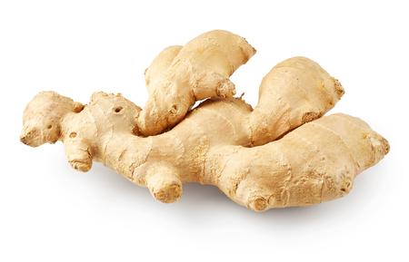 Ginger isoliert auf weißem Hintergrund Standard-Bild