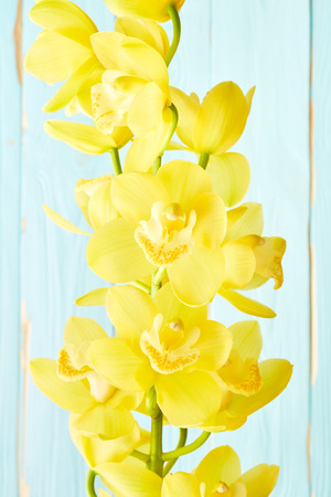 flowers close up: Yellow orchid flowers close up on wooden background