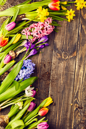 hyacinths: Tulips, narcissus, crocus and hyacinths on wooden background Stock Photo