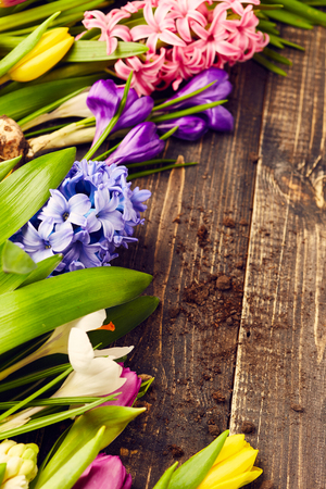 hyacinths: Tulips, hyacinths and crocus on wooden background