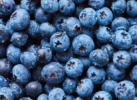 wildberry: Blueberry with drops of water
