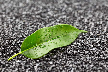 leaf water: Green leaf with drops of water on black stones