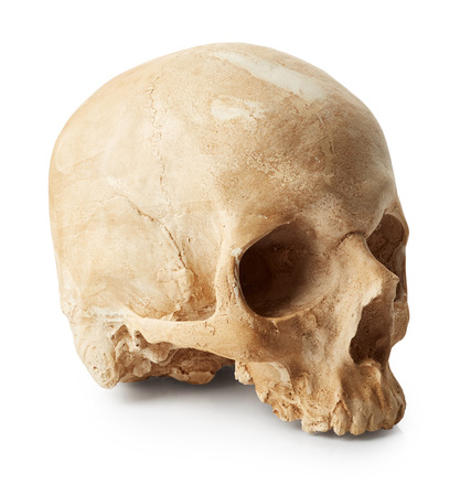 Male skull isolated on white background Stock Photo