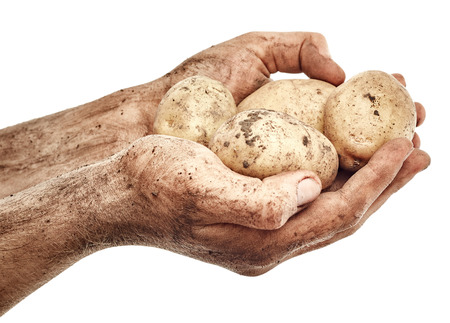 Dirty potatoes in male hands isolated on white background Stock Photo