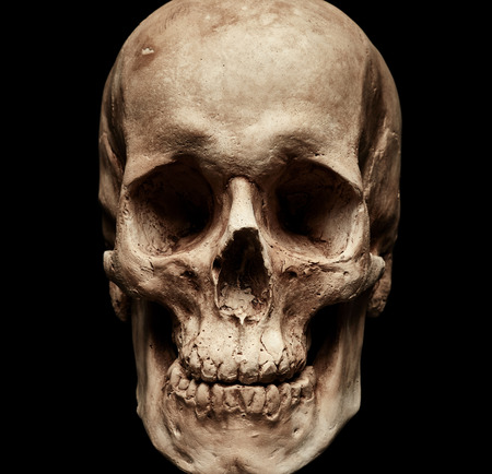 Skull portrait isolated on black background Imagens - 60664156