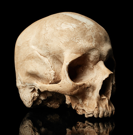 Side view of skull isolated on black background