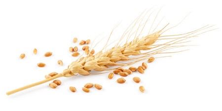 wheat kernel: Wheat isolated on white background