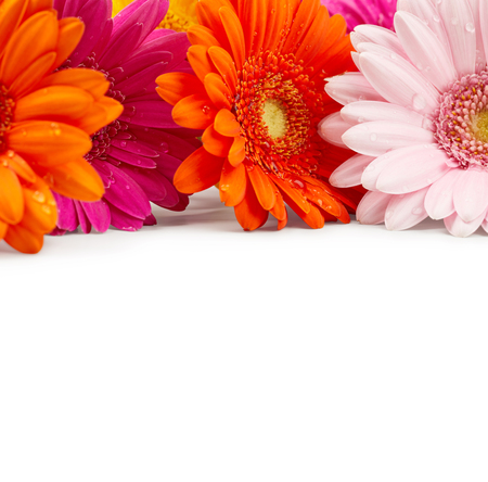 Gerbera flowers with drops of water isolated on white background Фото со стока