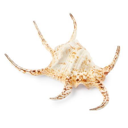 Seashell isolated on white background Stock Photo