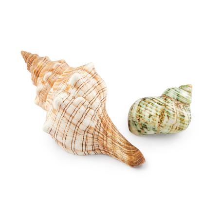 Seashells isolated on white background Stock Photo