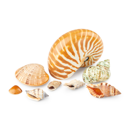 Nautilus and different seashells isolated on white background