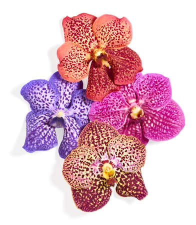 Beautiful orchid flowers isolated on white background Banque d'images - 152007234