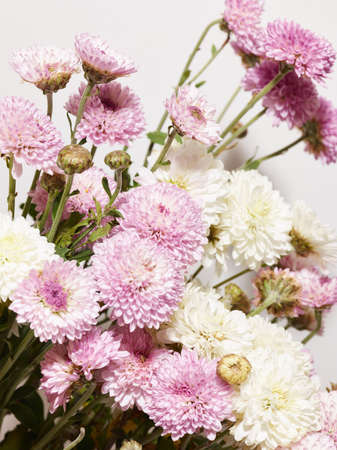 Bouquet of chrysanthemum flowers close up over white background