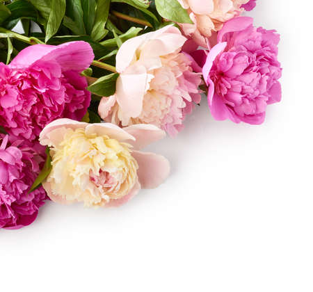 Beautiful bouquet of peony flowers over white background