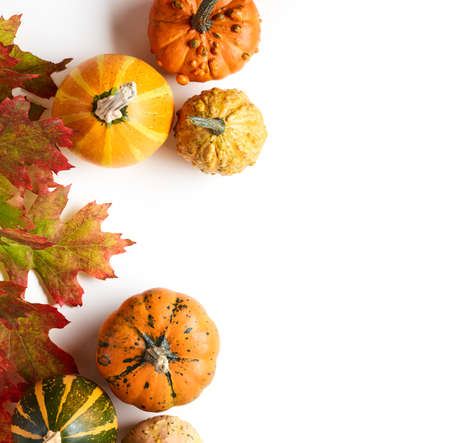 Pumpkins with autumn oak leaves over white background with place for text