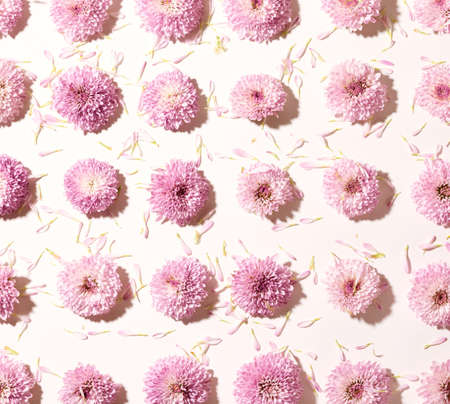 Pattern made with small pink chrysanthemum flowers and petals top view Standard-Bild
