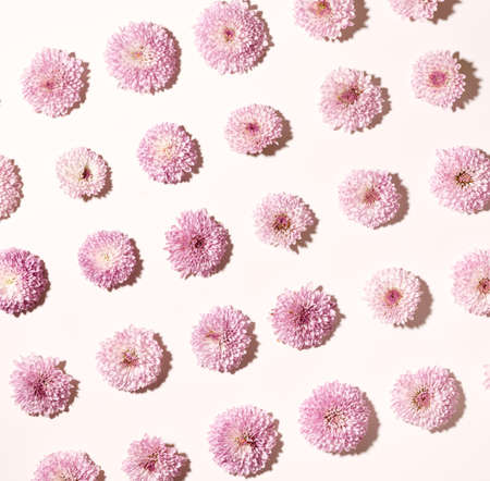 Set of cut flower heads over light pink background top view