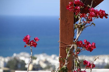 A branch of red oleander encircles brown wooden beams on the background of blue sea. Stock Photo