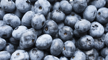 Closeup panning shot of fresh bilberry or blueberries