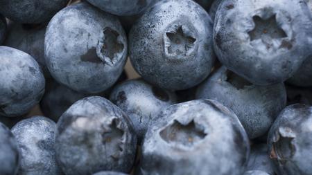 Macro shot of fresh bilberry or blueberries