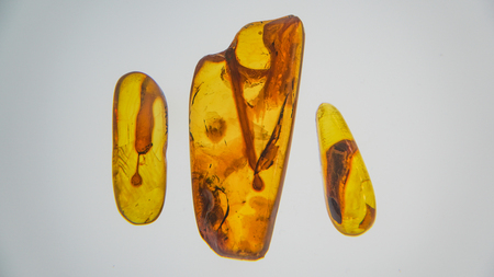 Amber stone. Authentic Baltic amber with prehistoric fossil insect macro. Magnifying glass and increasing amber