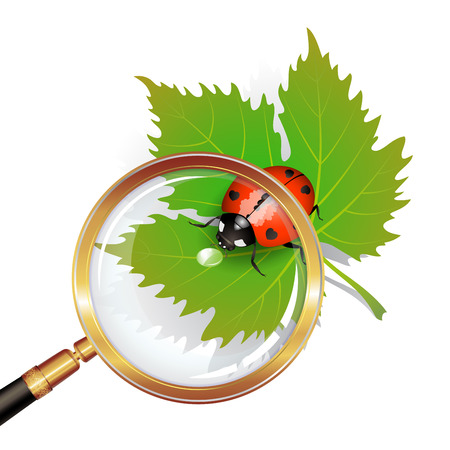 Vector illustration of a ladybug on leaf seen by a magnifying glass Vector
