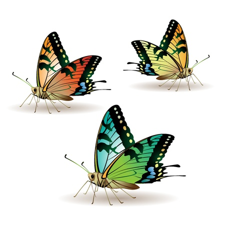 Butterfly collection isolated on white background Stock Vector - 8803819