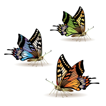 butterfly isolated: Butterfly collection isolated on white background