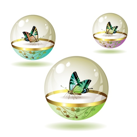 Butterfly collection isolated in glass globe on white background Stock Vector - 8803956