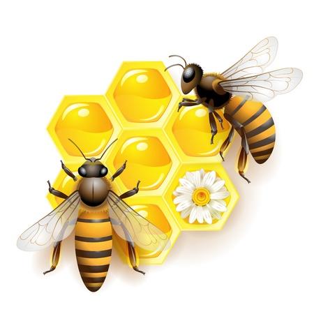 abeja: Dos de las abejas y panales aislados en blanco