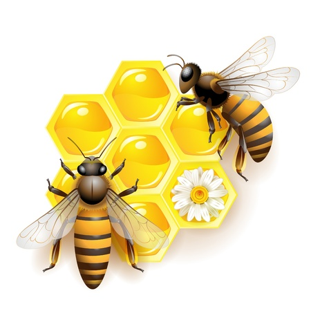 Two bees and honeycombs isolated on white Illustration